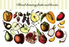 Плодоовощи и ягоды чертежа руки Иллюстрация штока
