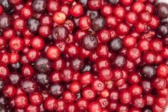 Плодоовощи кислой вишни Стоковое Фото