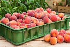 Плодоовощи персика Стоковое Фото