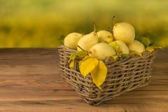 плодоовощи Свежие органические груши на старой древесине Сбор осени груши Стоковые Фото