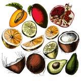 плодоовощи установили стилизованное свободной руки элементов чертежа естественное Иллюстрация штока