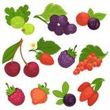 Плодоовощи ягоды vector плоские значки для варенья или сока бесплатная иллюстрация