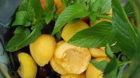 Плодоовощи для компота Стоковая Фотография RF