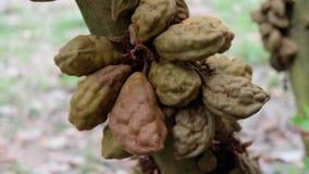 Плодоовощи Nan Nan Стоковое Фото