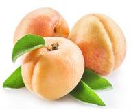 Плодоовощ абрикоса с листьями на белизне Стоковые Изображения RF