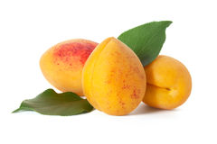 3 плодоовощ абрикоса с листьями Стоковые Изображения