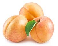 Плодоовощ абрикоса с листьями Стоковая Фотография