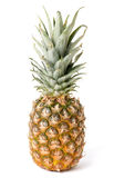 Плодоовощ ананаса изолированный на белой предпосылке Стоковые Изображения