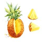 Плодоовощ ананаса тропический отрезает покрашенную руку иллюстрации акварели Стоковые Изображения