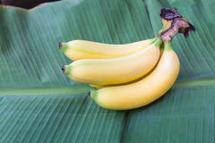 Плодоовощ банана Cavendish Стоковая Фотография RF