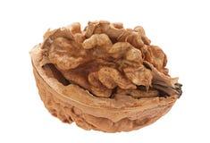 Плодоовощ грецкого ореха на белизне Стоковое Изображение