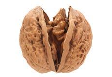 Плодоовощ грецкого ореха на белизне Стоковая Фотография