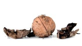плодоовощ грецкого ореха на белой предпосылке Стоковое Изображение RF