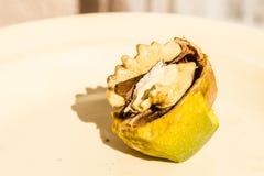 Плодоовощ грецкого ореха Стоковое Фото