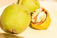 Плодоовощ грецкого ореха Стоковые Фото