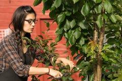 Плодоовощ задворк вишневого дерева черносливов милой женщины усмехаясь Стоковое Фото