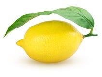 Плодоовощ лимона с лист Стоковые Изображения RF