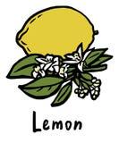 Плодоовощ лимона Иллюстрация штока