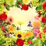 Плодоовощ и предпосылка рамки цветков декоративная Стоковое Изображение RF