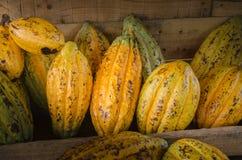 Плодоовощ какао, сырцовые фасоли какао, предпосылка стручка какао Стоковые Фото