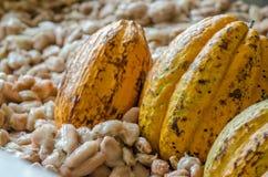 Плодоовощ какао, сырцовые фасоли какао, предпосылка стручка какао Стоковое Фото