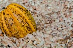Плодоовощ какао, сырцовые фасоли какао, предпосылка стручка какао Стоковое Изображение