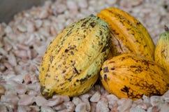 Плодоовощ какао, сырцовые фасоли какао, предпосылка стручка какао Стоковая Фотография