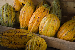 Плодоовощ какао, сырцовые фасоли какао, предпосылка стручка какао Стоковые Изображения
