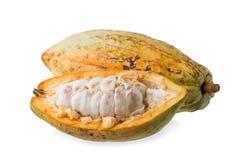 Плодоовощ какао, сырцовые фасоли какао, стручок какао на белой предпосылке Стоковые Фото