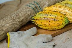 Плодоовощ какао, сырцовые фасоли какао, стручок какао на деревянной предпосылке Стоковые Фото