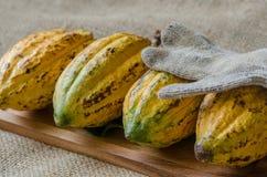 Плодоовощ какао, сырцовые фасоли какао, стручок какао на деревянной предпосылке Стоковые Фотографии RF