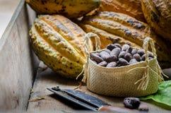 Плодоовощ какао, сырцовые фасоли какао, стручок какао на деревянной предпосылке Стоковая Фотография
