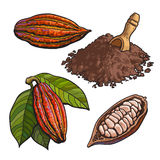 Плодоовощ какао, фасоли и порошок, комплект иллюстраций вектора стиля бесплатная иллюстрация