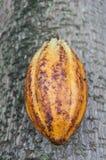 Плодоовощ какао Стоковые Изображения