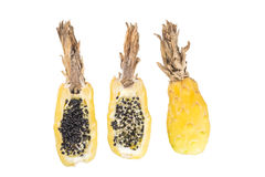 Плодоовощ кактуса бочонка Стоковые Фото