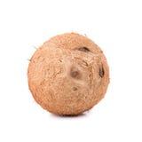 плодоовощ кокосов на белой предпосылке Стоковые Изображения