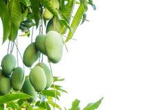 Плодоовощ мангоа Стоковые Фотографии RF