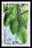 Плодоовощ манго серия ` плодоовощей ` изображений экзотического около 1986 Стоковое Фото