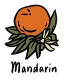 Плодоовощ мандарина Бесплатная Иллюстрация