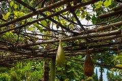 Плодоовощ на ветви в парке Стоковое фото RF