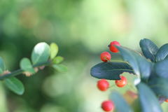 Плодоовощ осени Стоковое Изображение RF