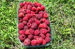 Плодоовощ поленики в корзине на лужайке Стоковые Изображения