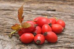 Плодоовощ плода шиповника Стоковые Фотографии RF