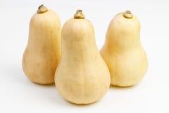 3 плодоовощ сквоша butternut Стоковое Изображение