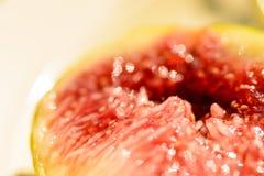 Плодоовощ смоковницы Стоковые Фотографии RF