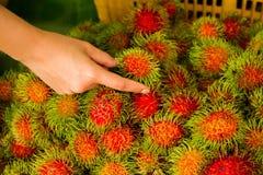 плодоовощ тропический Стоковое Фото