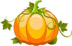 Плодоовощ тыквы Vegetable иллюстрация штока