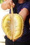 Плодоовощ дуриана зрелый для съеденный в руке Стоковые Фотографии RF