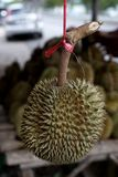 Плодоовощ дуриана; король плодоовощ Стоковые Изображения