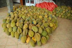Плодоовощ дуриана Стоковое Фото